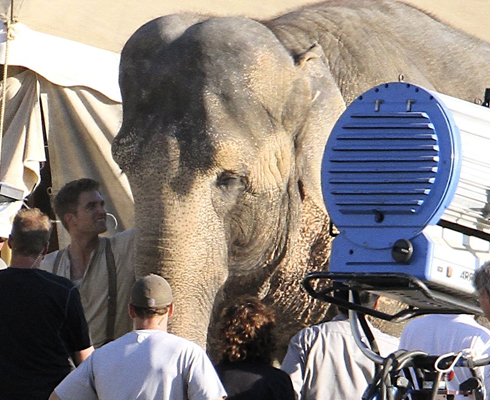 "Rob am ""Water for Elephants""-Set mit Elefantendame Rosie!"