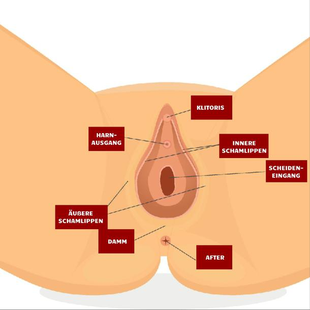 Vagina Illustration
